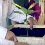 Bitkilerle çalışan ışık kaynağı tasarlandı
