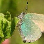 Kelebek Kanatlarından İlham Alan Yeni Teknoloji