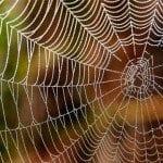 Örümcek ağı neden çok güçlüdür?